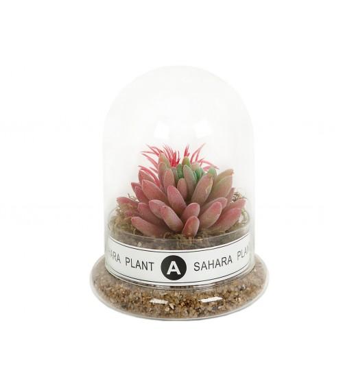 Maceta Cactus C/Campana Vidrio