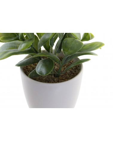 Planta con Maceta de Gres Blanca