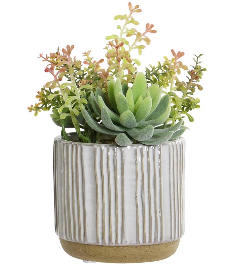 Planta con Maceta de Gres